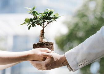Man and boy holding bonsai tree