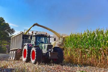 Wall Mural - Maisernte - Abernten eines Maisfeldes mit Erntemaschinen