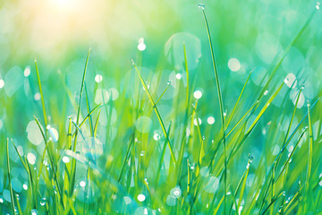 Abstract green grass nature blurred background on meadow. Juicy lush grass on meadow with drops dew in morning light, outdoors. artistic image of purity freshness nature. close up. shallow depth