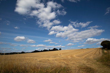 Clouds over recently harvested crop with stubble left in field in the rural county of Hampshire