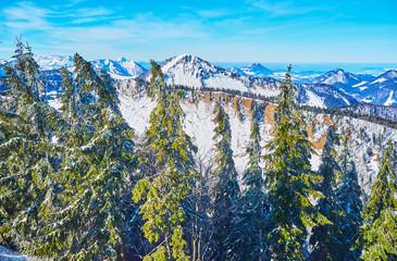 Spruce forest on Zwolferhorn, St Gilgen, Salzkammergut, Austria