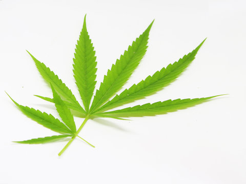 """Thaistick"" Thai marijuana is the best breed of the world"