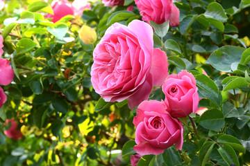 Blumen 1136