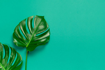 Fotomurales - Creative minimal background with tropical leaves. Monstera leaves on blue emerald background. Flat lay, top view, copy space. Summer background, nature. Leaf pattern