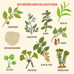 Fototapeta Best nootropic medicinal herbs for a healthy brain