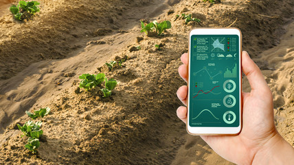 A man with a smartphone analyzes state young sprouts of potatoes. Planting potato plantations. protection from pests. Agribusiness, farming, Data collection analysis. Innovation agricultural industry Fototapete