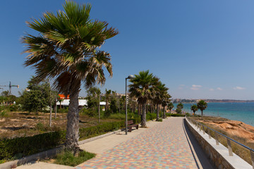 Palm trees at Mil Palmeras Costa Blanca Spain on promenade paseo leading to the beach