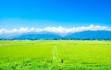 Stores à enrouleur Vert chaux 夏の信州 安曇野の田園風景