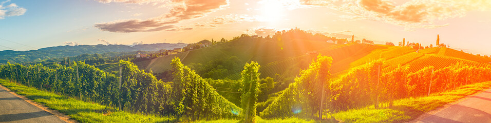 Wall Murals Vineyard Panorama view of Vineyards in summer in south Styria, Austria tourist spot, travel destination.