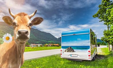 Kuh und Reisemobil in Bayern
