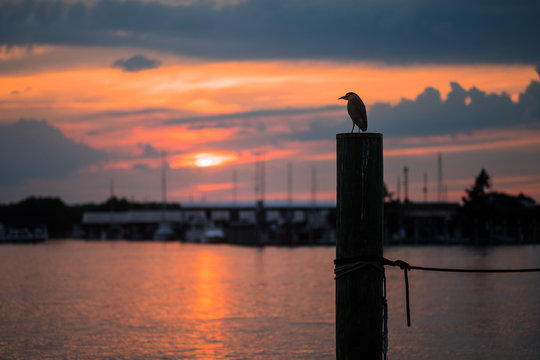 The silhouette of a great blue heron in Kent Island, Maryland