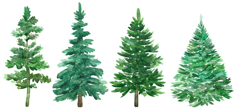 Watercolor Christmas green trees. Spruce and holiday tree. Hand-drawn illustration.