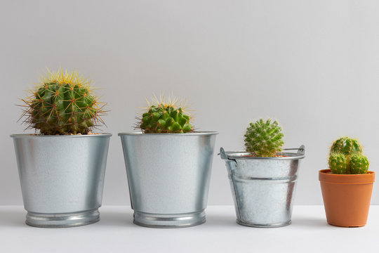 set of various cactus plants in pots. Cactus plant in different pot and view on table front of white wall