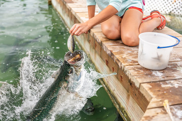 Girl hand feeding tarpons in Marina of Key West, Florida. USA tourist attraction lifestyle activity.