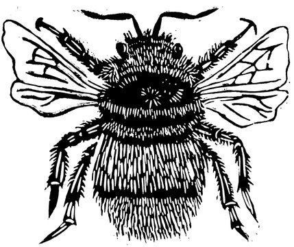 Bumblebee Bee Lino Print Illustration