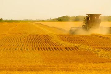 Canadian Farmer harvesting field on a combine harvester in Winnipeg Manitoba Wall mural