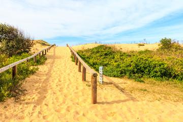 Sand dunes, Curl Curl beach
