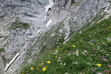 Fototapete - hochgebirge