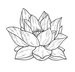 Beautiful black lotus flower monochrome vector hand work illustration is isolated on a white background. Decorative element for design