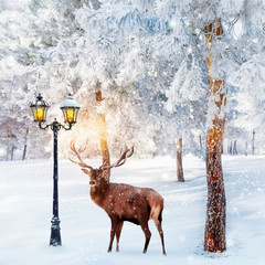 Red deer in a fabulous Christmas forest on a background of snowy trees and a lantern. Composite image. New Year card. Square image.