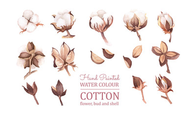 vector clip art of cotton flower, bud, pod, and shell. ready to use. isolated in white background. set of element for autumn, fall, rustic, or bohemian wedding card decoration