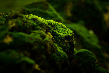 Beautiful green moss on the floor wallpaper background.