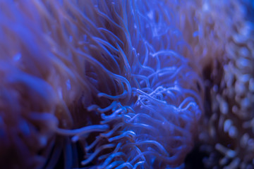 Corals in underwater tropical sea
