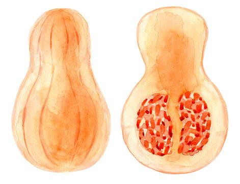 Watercolor autumn pumpkin. Hand drawn summer illustration. Design for fabric, packaging