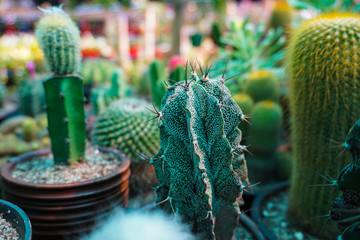 A Cactus (plural Cacti) is a block that spawns naturally in Desert biomes and Mesa biomes. Cacti can rarely be found on clay that is found outside a body of water. Wall mural