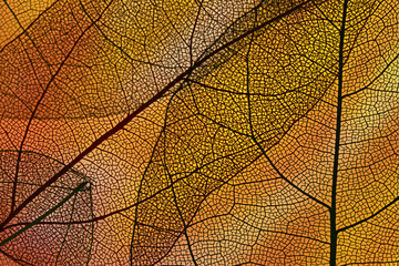 Abstract orange colored autumn foliage