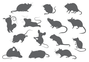 Different mice. Mouse yoga poses and exercises. Cute cartoon clipart set