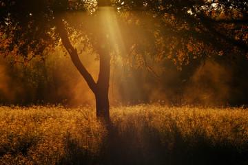 Aluminium Prints Texas Texas field in rural landscape during fall sunrise through tree.