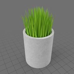 Onion grass in pot