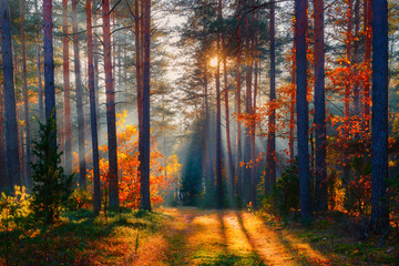 Spoed Foto op Canvas Herfst Autumn forest scene