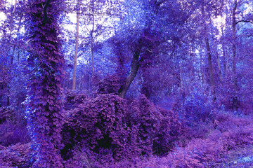 Poster Prune fantasy blue forest beautiful background