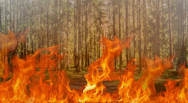 Forest fire digital composite - amazon tragedy concept
