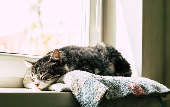 The cat sleeps on the windowsill