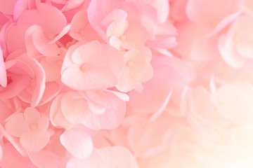 Hydrangea with soft pastel color in  blur style for background