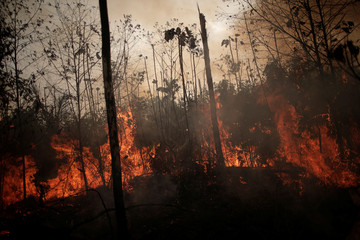 A burning tract of Amazon jungle is seen while as it is being cleared by loggers and farmers in Porto Velho