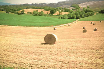 Wheat field with hay bales
