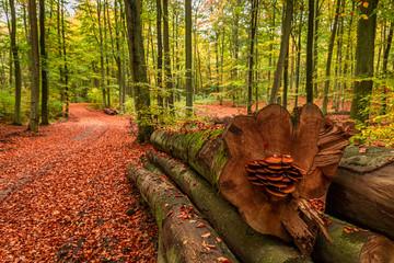 Photo sur Aluminium Brique Colorful autumn in the sunny forest, Europe
