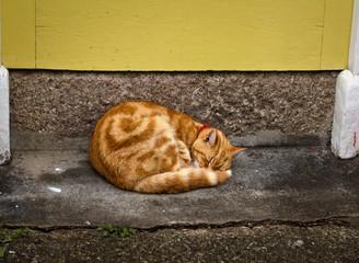 cat at the doorstep - St. Ives - Cornwall