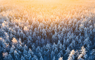 Winter forest view from above