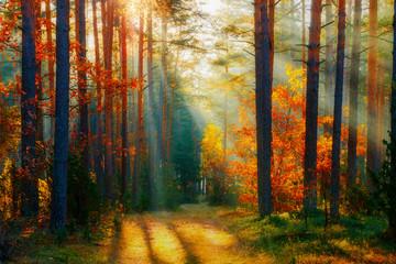 Autumn forest landscape Fototapete