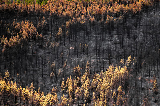 Gran Canaria after wild fire