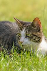 Eine Katze sitzt im Gras