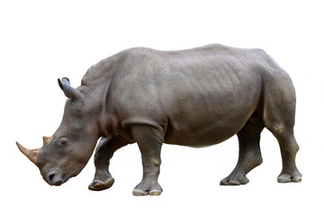 Foto op Aluminium Neushoorn Rhinoceros isolated on white background.