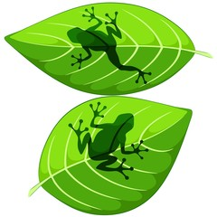Frog shapes on Green Leaves Vector illustrations isolated on white