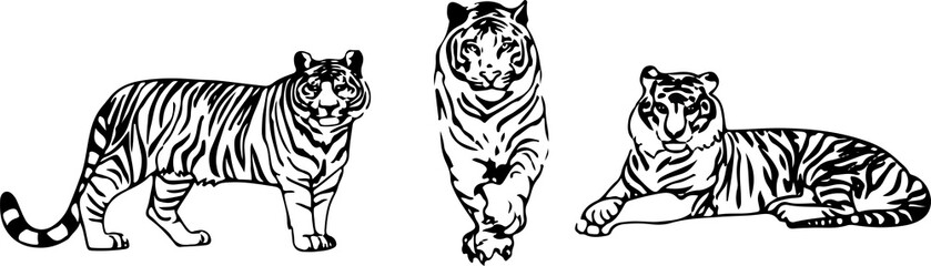 tiger vector on color background