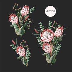 Set of bouquets with protea flowers, eucalyptus and leaves isolated. Vector.
